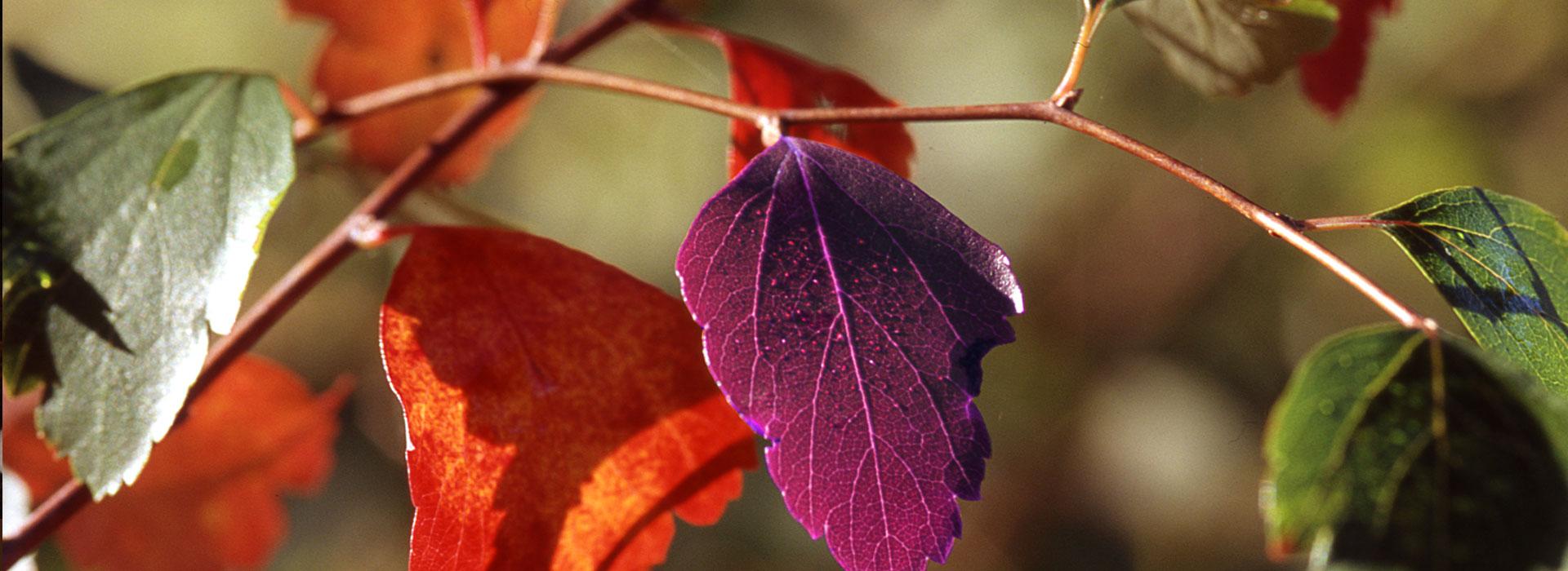 Silberschmuck - Herbst Farbtrends